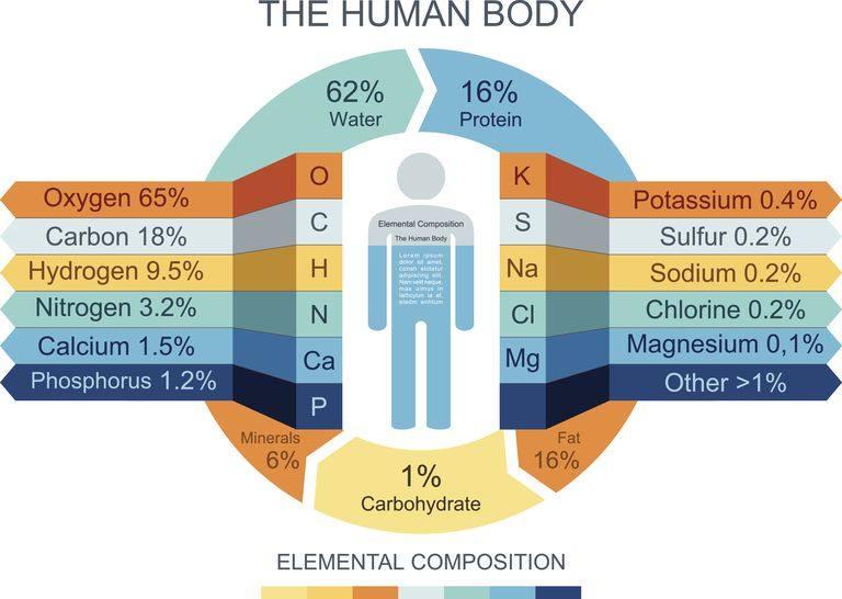 human-body-infographics-465321784-57ab54755f9b58974a07fa9f