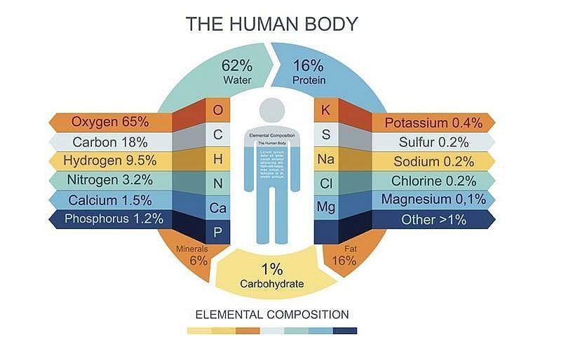 Image result for chemical composition of human body